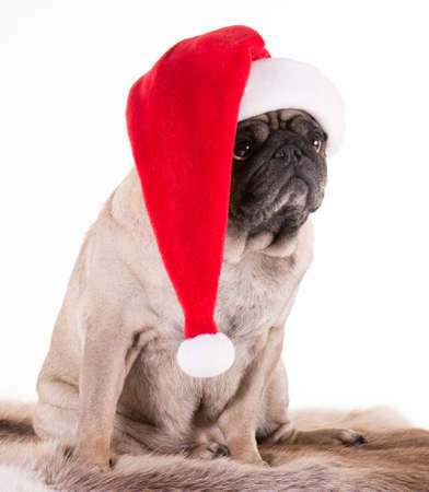 A dog clothed in Santa Stock Photo - 16661950