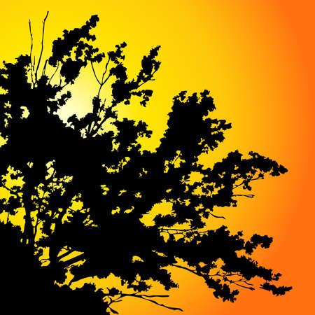 afrika: tree