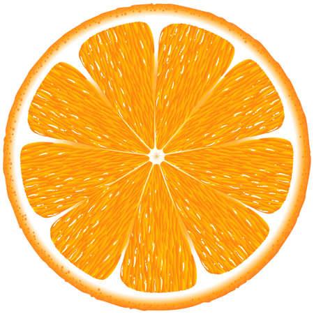 오렌지: 오렌지 배경 일러스트