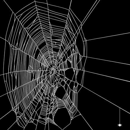 spiderweb: halloween background