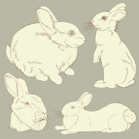 lapin dessin: ensemble de lapin Illustration