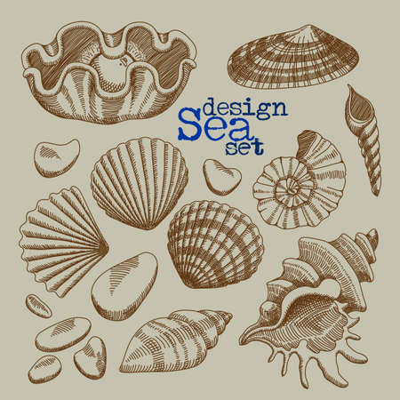sunroof: A set of sea shells, freehand drawing Illustration