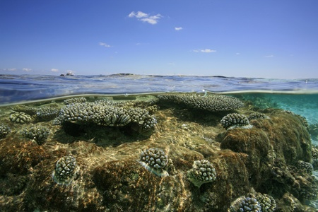 stony corals: Tropical Lagoon with stony corals Stock Photo