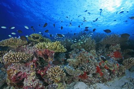 Récifs coralliens dans l'océan Indien
