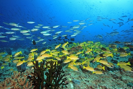 Coral reef with fish in the indian ocean  Stock Photo
