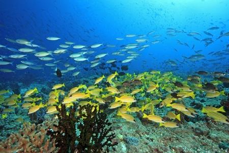 Koraalrif met vissen in de Indische Oceaan Stockfoto