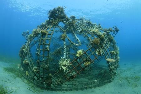 Kunstmatige koraalrif in de oceaan Stockfoto