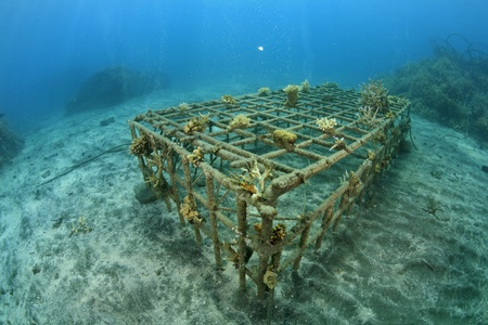 Artificial coral reef in the ocean  photo