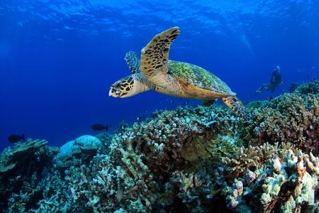 dive trip: Sea turtle  Stock Photo