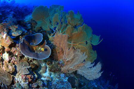Coral garden photo