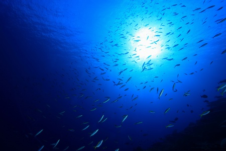School of small fish in the blue ocean Stock Photo