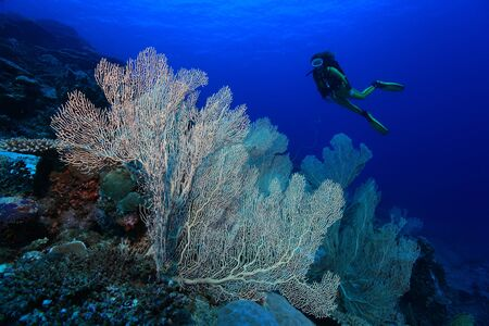 Coral reef and scuba diver Stock Photo - 16139796