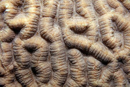 polyp corals: Close up of stony coral