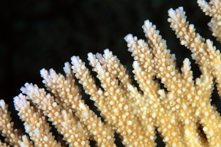Close up of stony coral photo