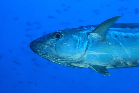 Tuna fish photo