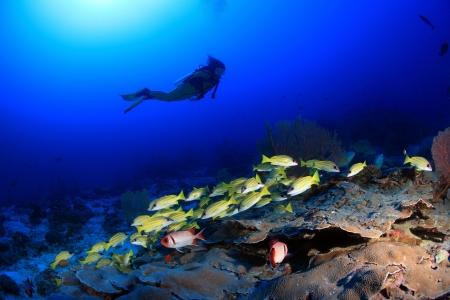 Scuba-duiker onderzoekt koraalrif