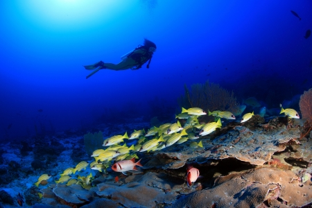 Taucher erforscht Korallenriff Standard-Bild - 17420498