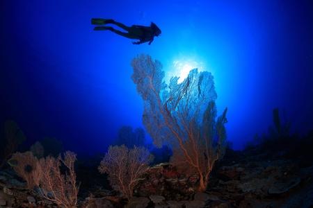 Scuba diver explores coral reef photo