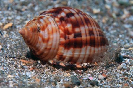 slug: Sea slug