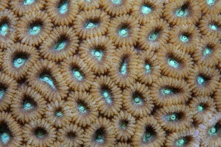 stony corals: Close up of stony coral