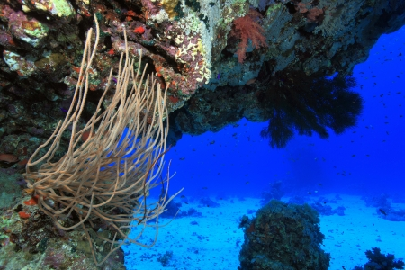 sharm el sheik: Soft coral in the tropical reef of the red sea  Stock Photo