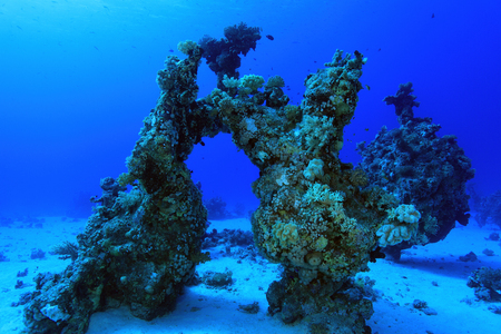 sharm el sheik: Coral structure in the tropical reef of the red sea