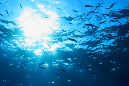submerge: Water surface with fish and sun in the ocean