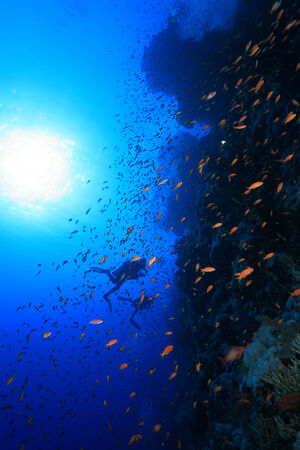 anthias fish: Colorful fish and scuba divers in the red sea