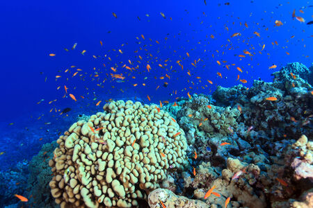 sharm el sheik: Coral reef and colorful fish in the red sea  Stock Photo