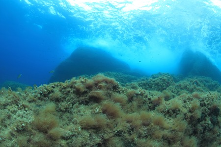 Seafloor of the mediterranean sea photo
