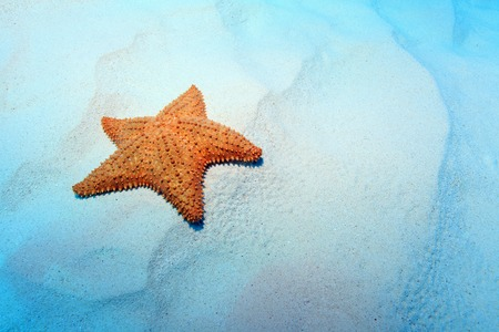 Cushion sea star  Stock Photo