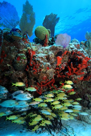 reef fish: Tropical coral reef and fish