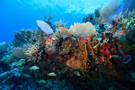 gulf of mexico: Colorful tropical coral reef