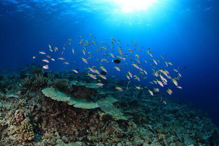 shoal: Shoal of small fish