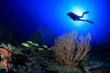 Scuba-duiker verkennen tropisch koraalrif
