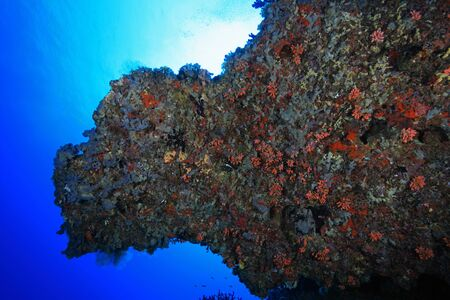 welling: Tropical coral reef in the indian ocean