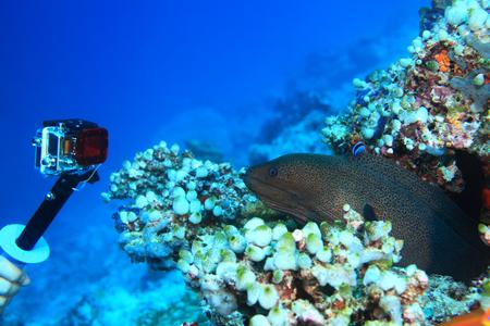 Action camera shooting dangerous moray eel