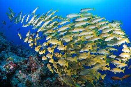 Shoal van kleurrijke vissen