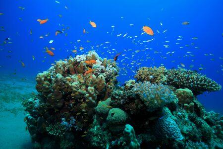 arrecifes de coral tropicales en el Mar Rojo Foto de archivo