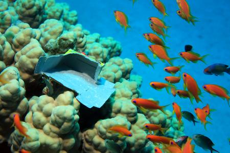 sharm el sheik: Marine pollution on corals of tropical coral reef