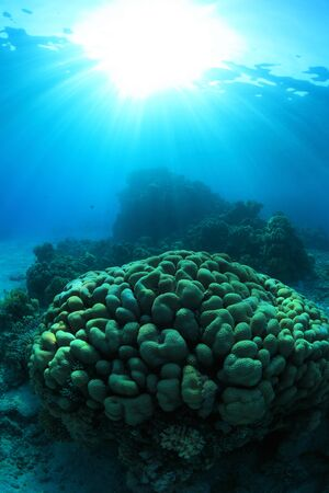 red sea: Tropical coral reef in the red sea