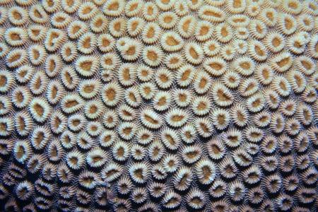 brain coral: Brain coral Stock Photo