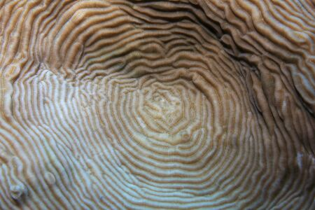 Close up of stony coral underwater in the tropical reef of the indian ocean Stock Photo