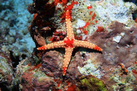 Abnormal starfish