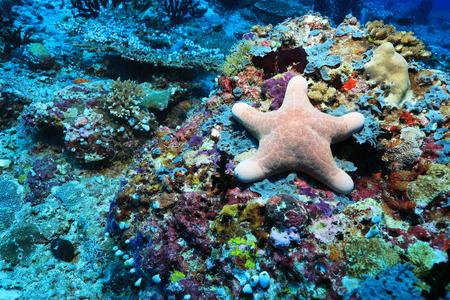 sealive: Granular starfish