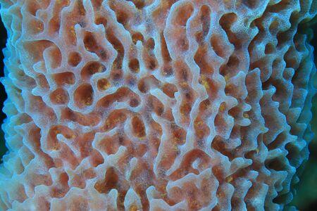Close up of caribbean sea sponge