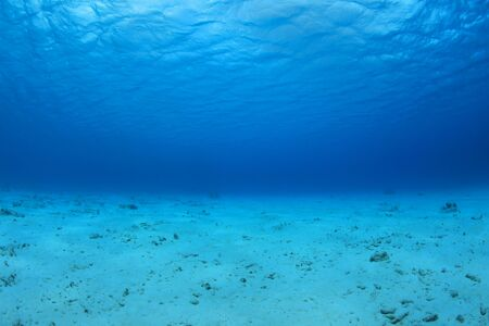 Sea floor and water surface in the caribbean sea