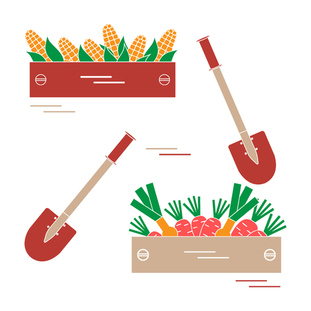 Cute vector illustration of harvest: two shovels, two boxes of corn, carrots, and onion. Design for banner, poster or print. Illustration
