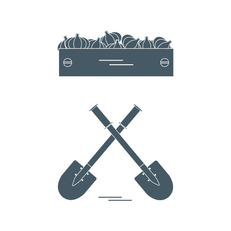 Cute vector illustration of harvest: two shovels and box of garlic. Design for banner, poster or print.