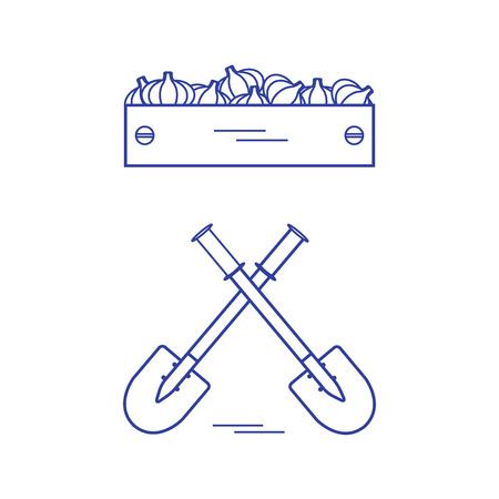 wood crate: Cute vector illustration of harvest: two shovels and box of garlic. Design for banner, poster or print.